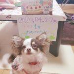 今日は、愛犬の誕生日♡とびっきりのプレゼントを贈って、最高の笑顔をいただき