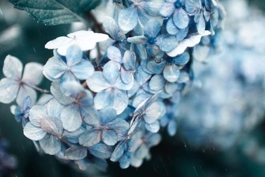 """""""ぽつぽつ""""が心に響く。自然がくれた素敵な音色で『雨の日』をもっと彩るあれこれ"""