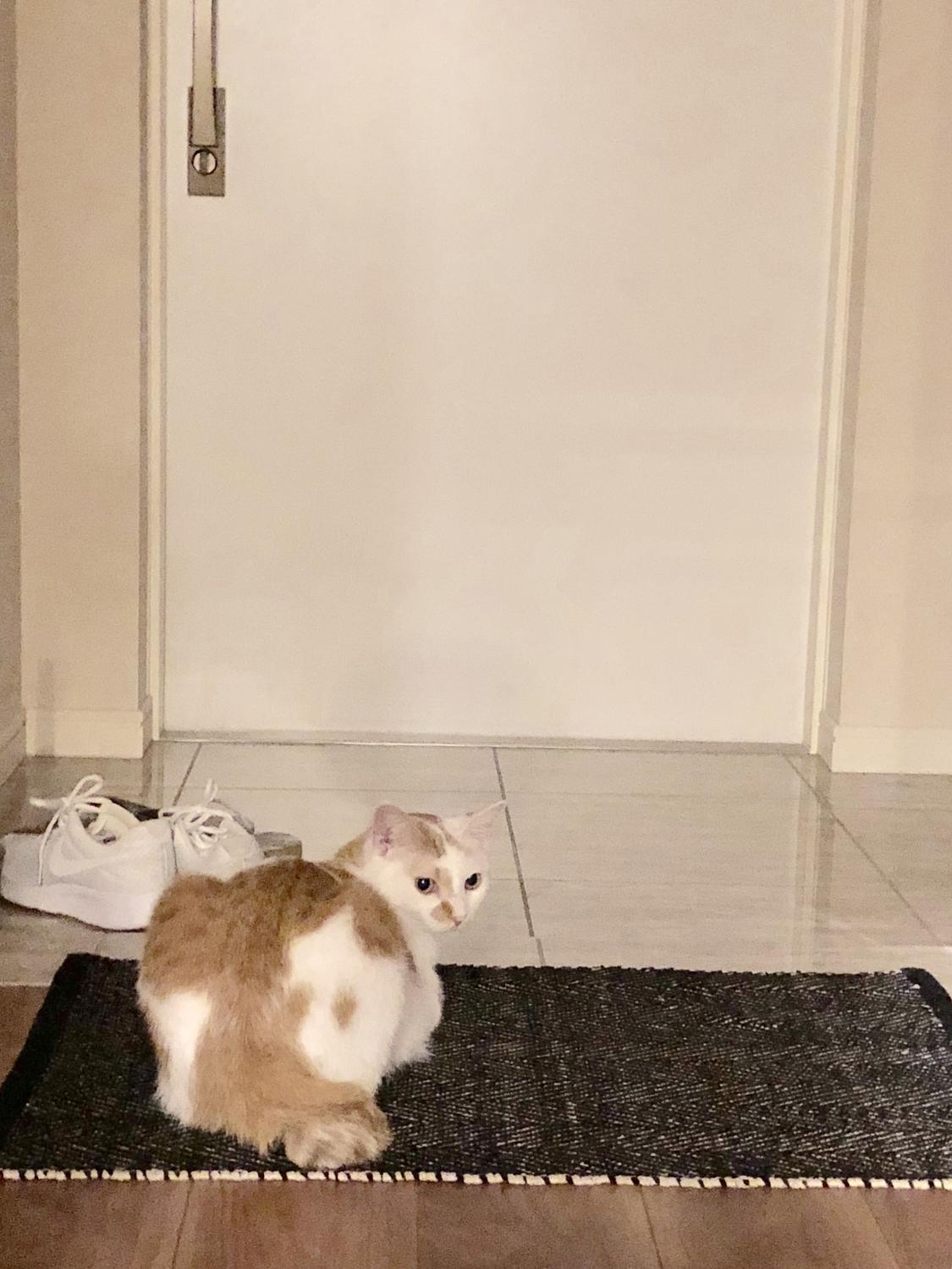 残り5分:ササッと簡単に玄関を掃除