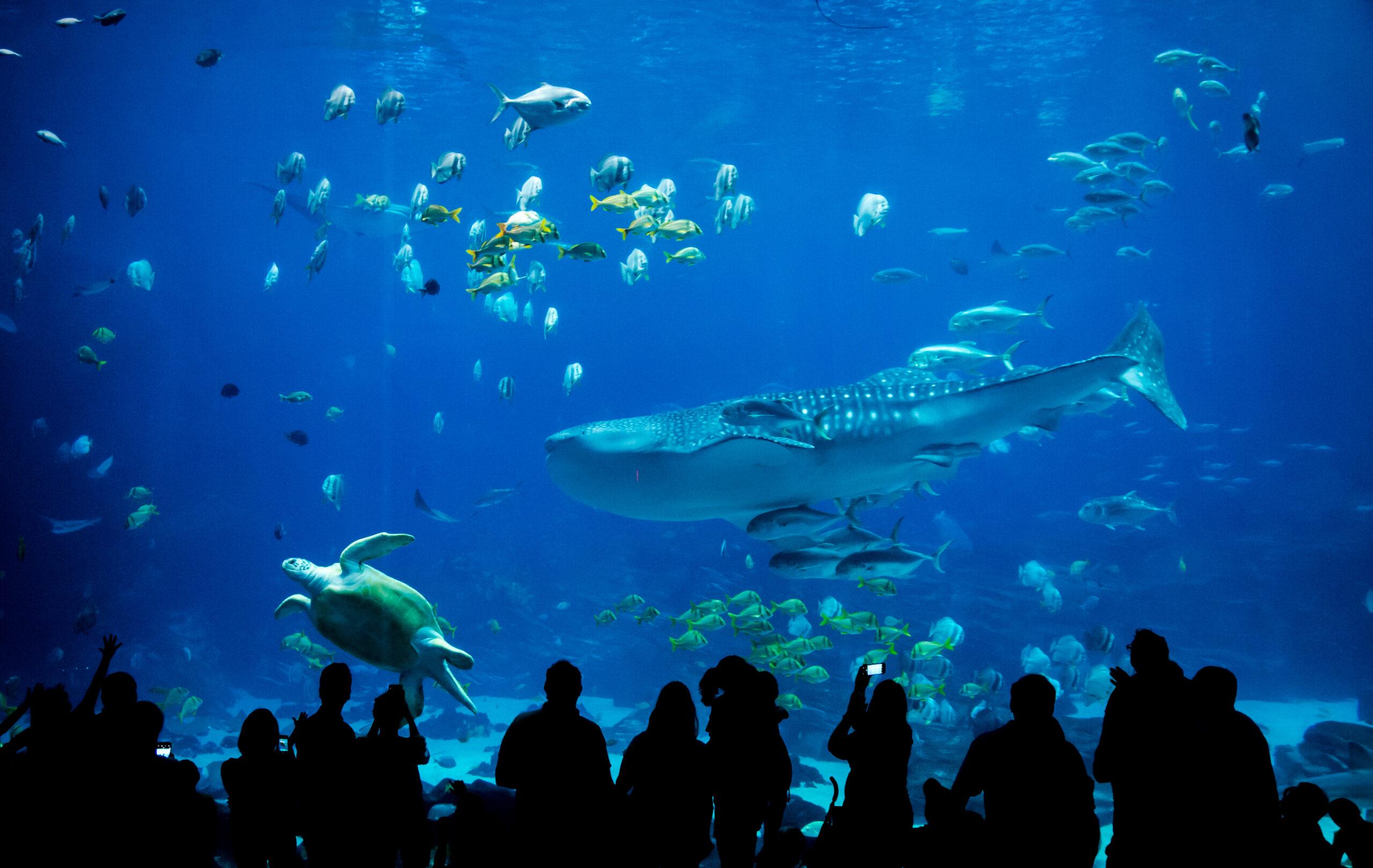 ♡|室内だから快適な水族館