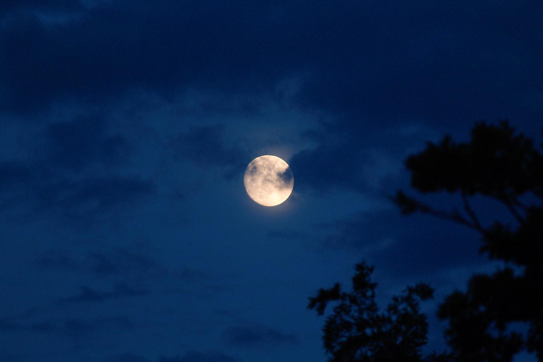 月の夜、お会いしてもいいですか