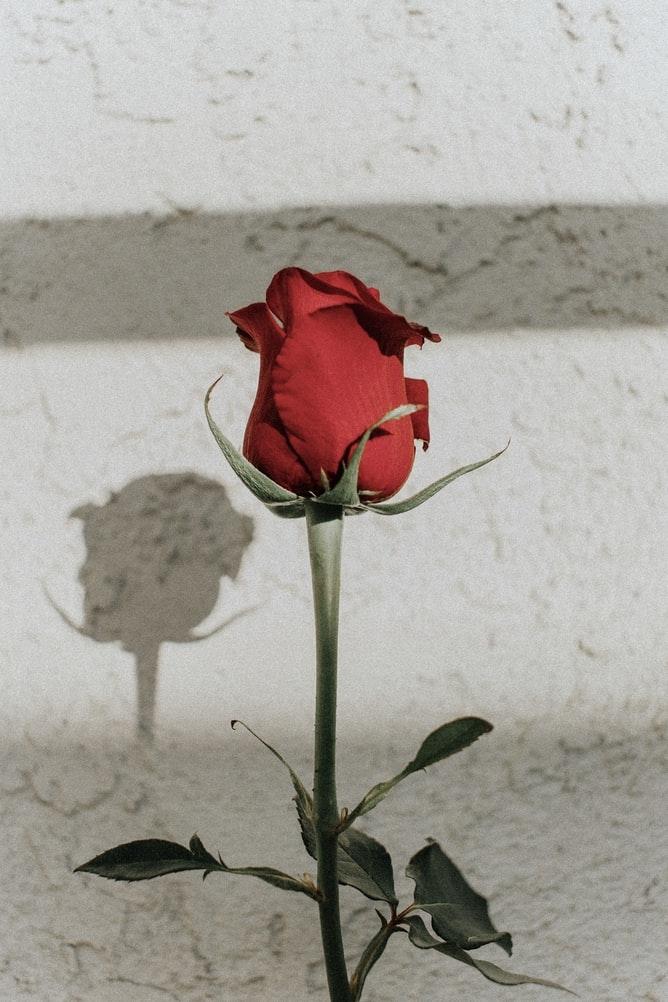 薔薇の香りが大好きなんです