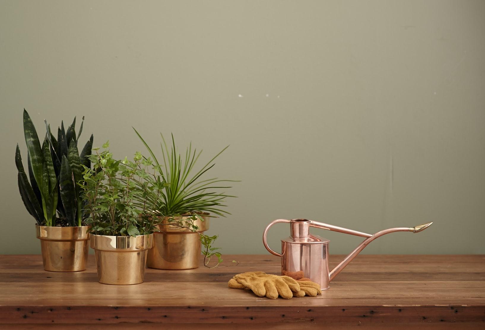 観葉植物をおうちに迎えたいけど…
