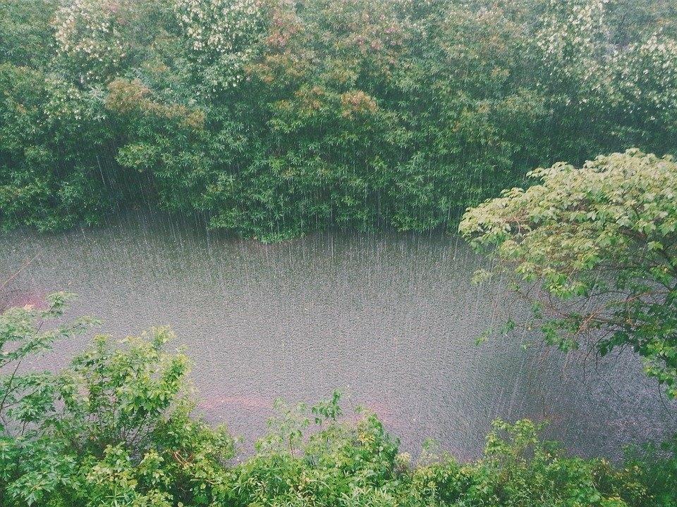 「雨降り花」って知ってる?