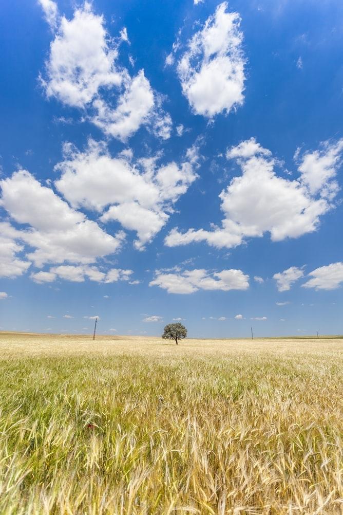 雲を見ると、心が和む