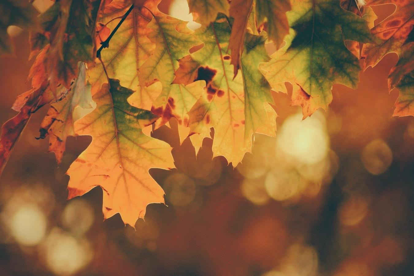そろそろ秋が近づいてきます