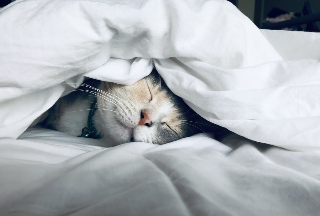 ▶寝てスッキリしてみる