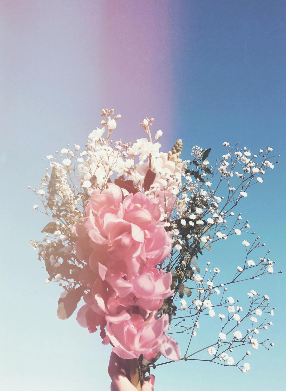 『花とゆめ』で私の気持ちを癒やして