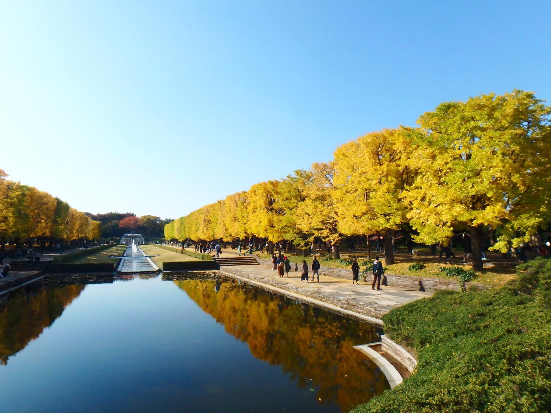 美しいお花に癒される|国営昭和記念公園