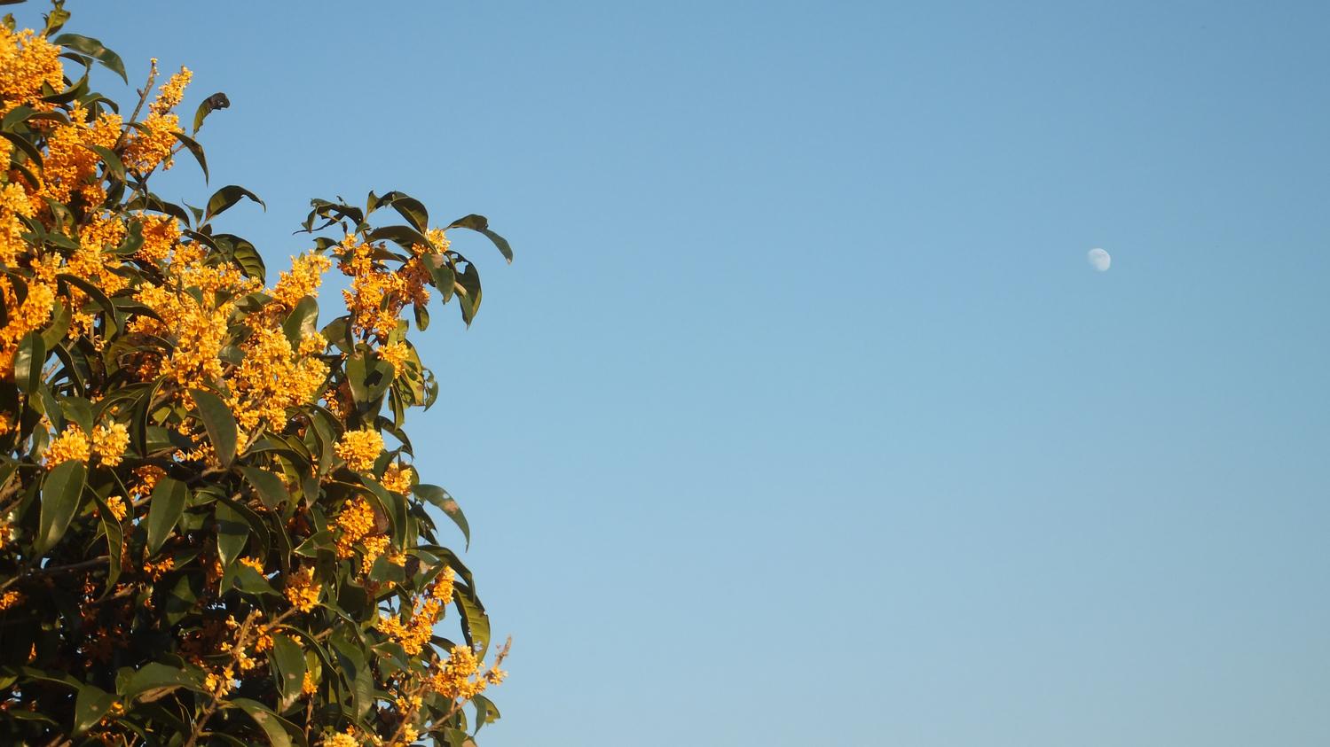ふわっと、秋の香りが鼻をかすめた