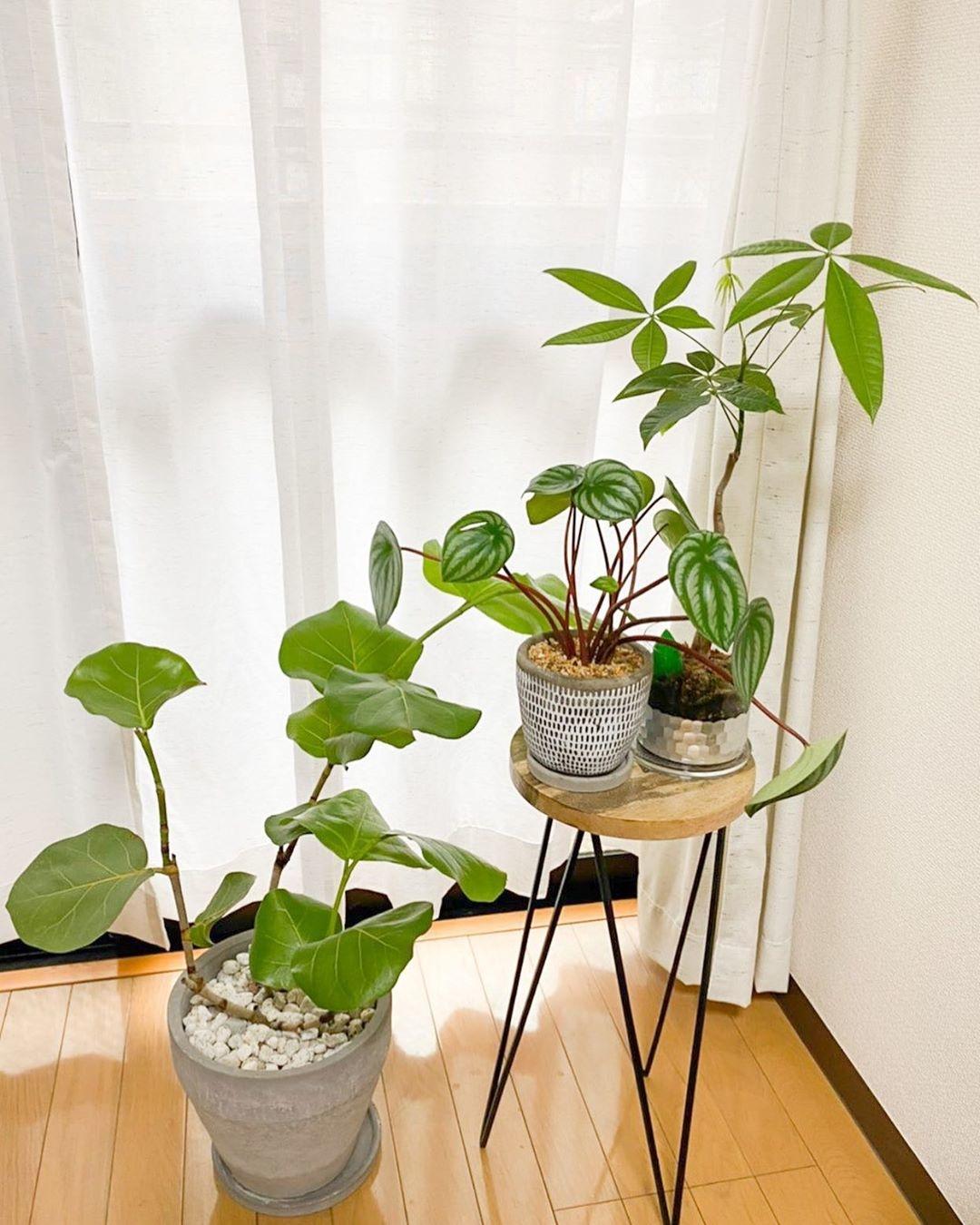 ミニテーブル|観葉植物を置けるサイズを