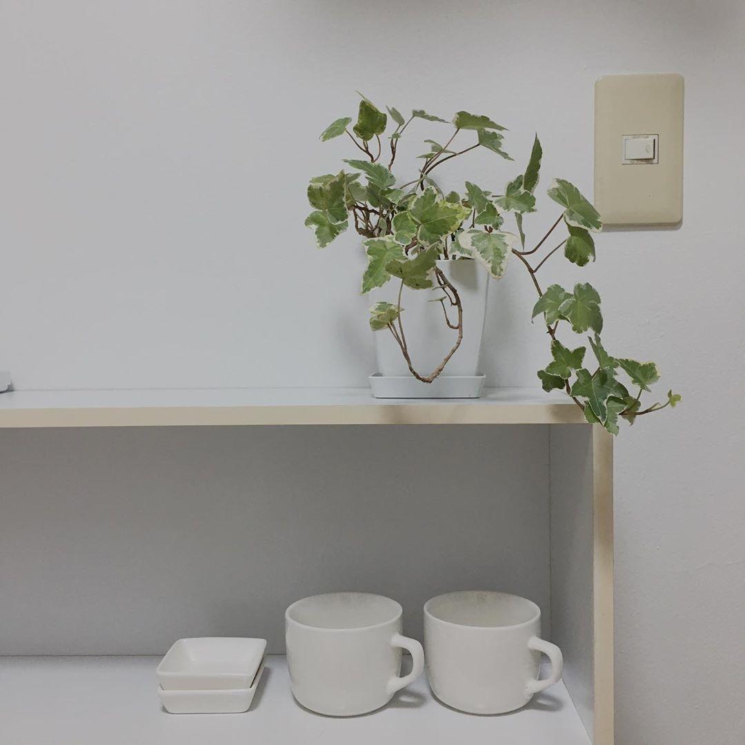 アイビー|種類が豊富なつる性植物