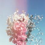 欲張りgirlはときめき+αが欲しいのです。気持ちに寄り添う『花とゆめ』の処方箋