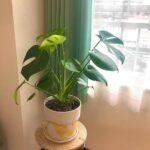 おうちで育てるには、どれが良いのかな?おすすめの観葉植物+インテリアidea