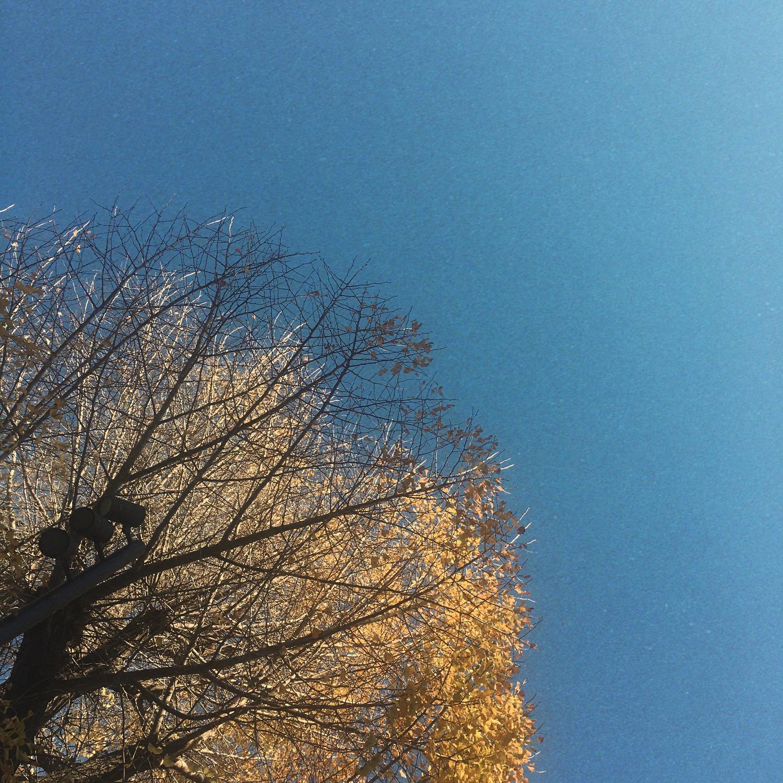 秋を十分に楽しんでみて