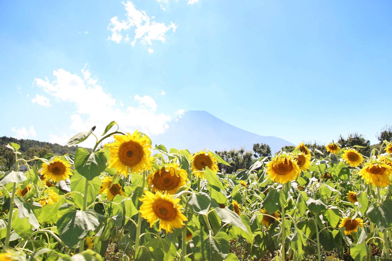 富士山との共演を楽しめる♡