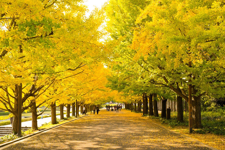 まだ見ぬ秋を探しに行こう