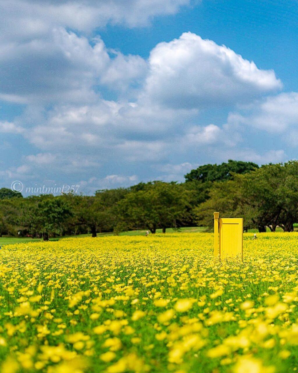 【都内近郊】一面に広がるお花ってわくわくする。秋にも楽しめるお花畑4types
