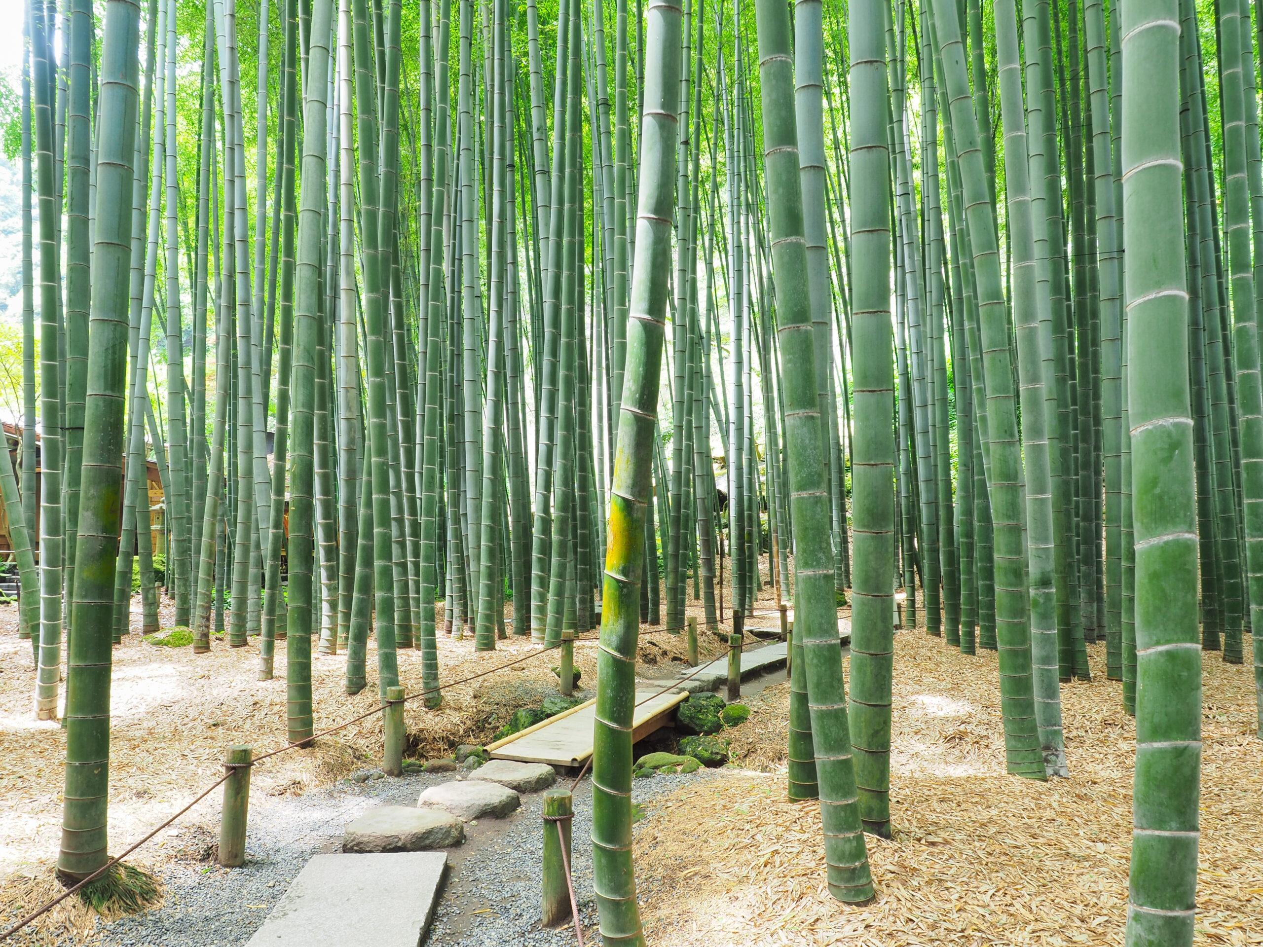 報国寺の竹の庭を満喫して