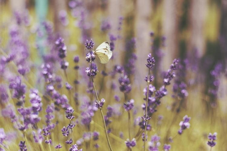 花に集まる、美しい蝶々