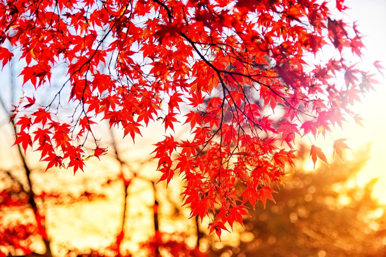 もみじのような美しい紅色