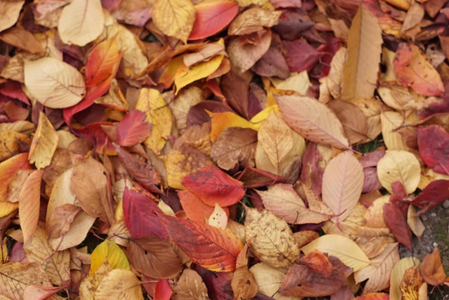 深まる秋を象徴するような茶色