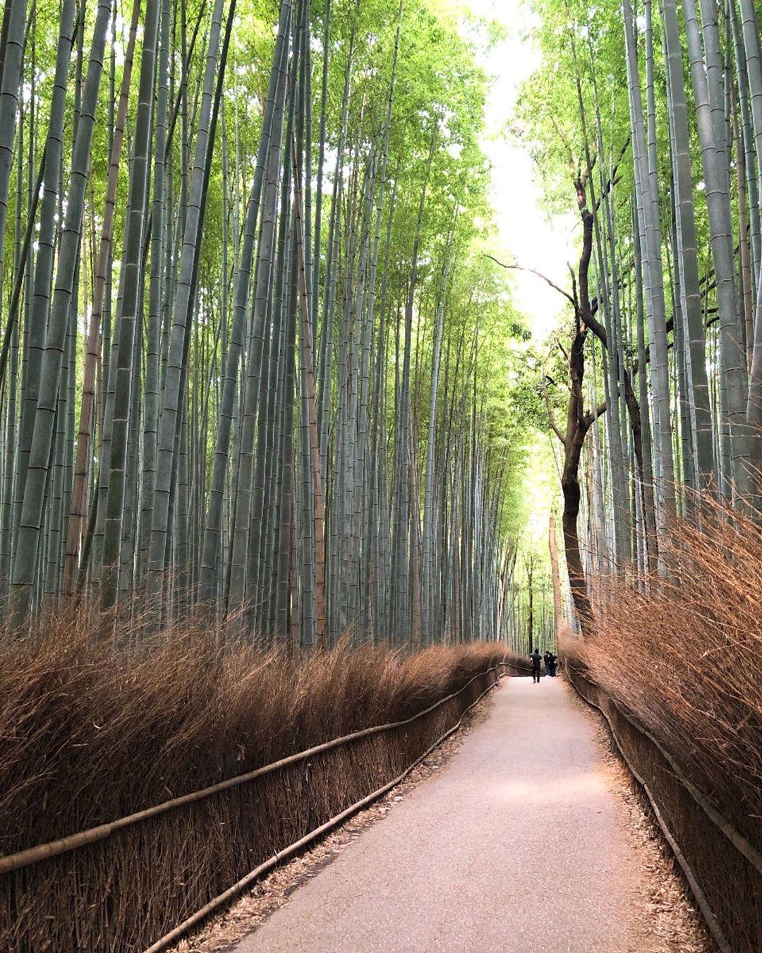 >>「竹林の小径」に行ってみよう