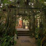 シトシト音は幻想的な異世界への合図です。雨の日は、植物園に行きませんか?