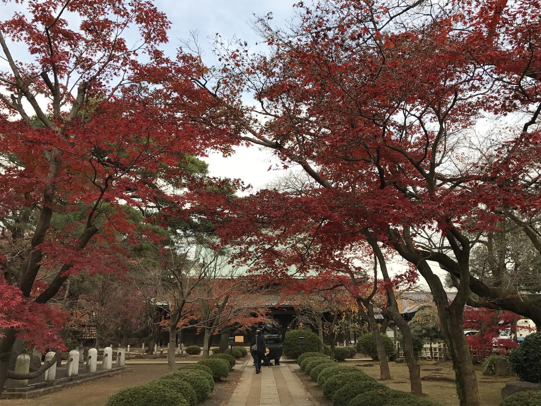 豪徳寺(寺)