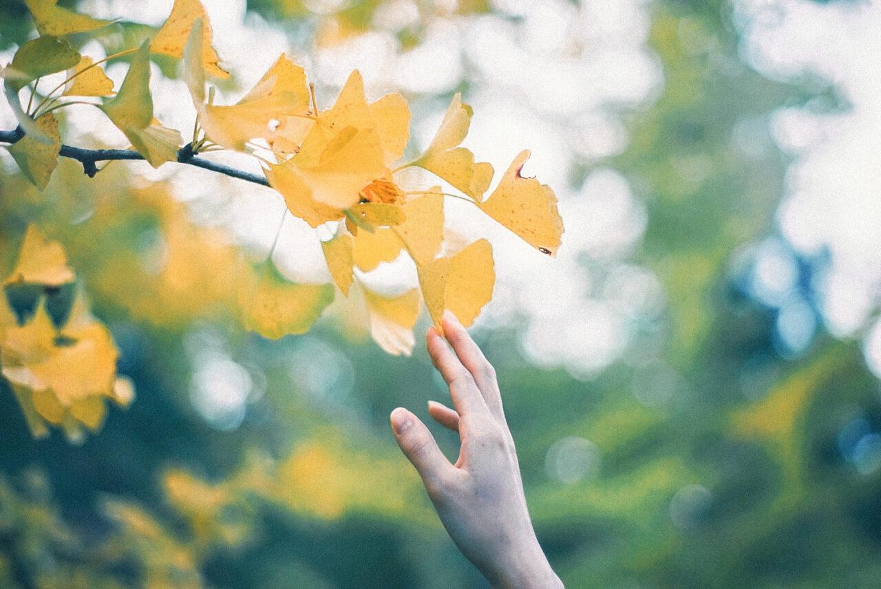 1:植物オイル使用で内側から潤う手肌に