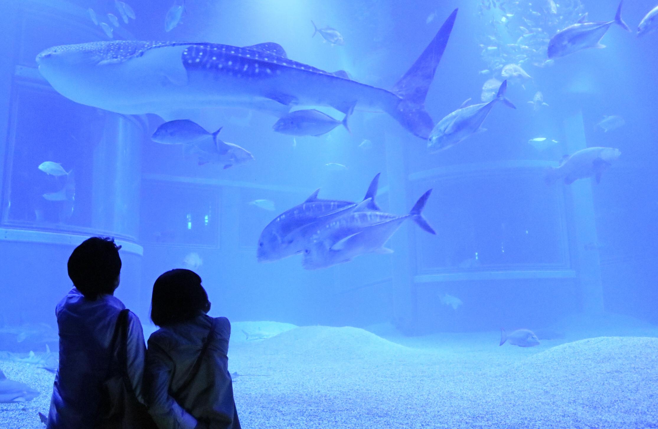 Scene2_水族館デート