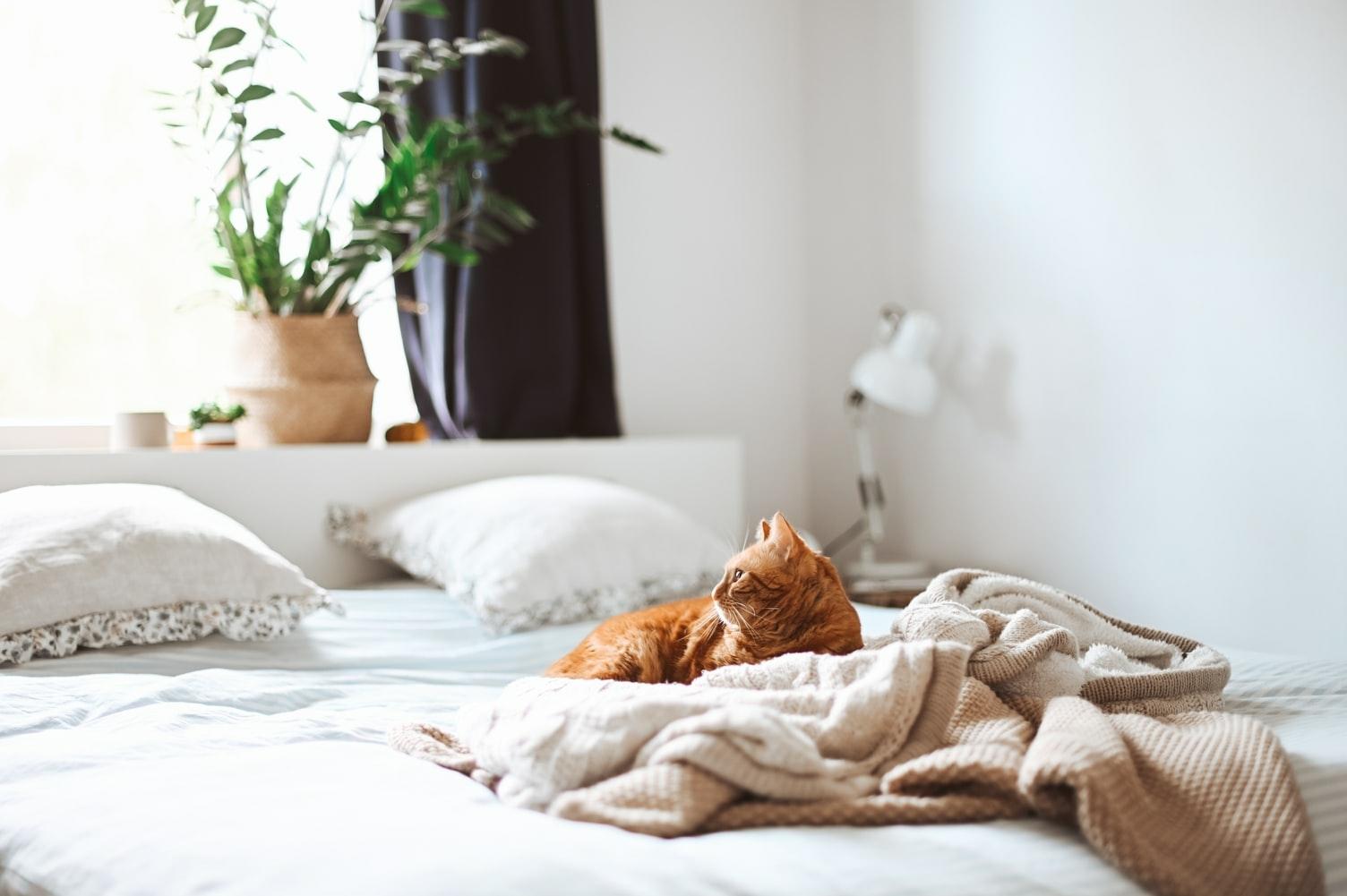 快適な睡眠は、ベッド周りにあり