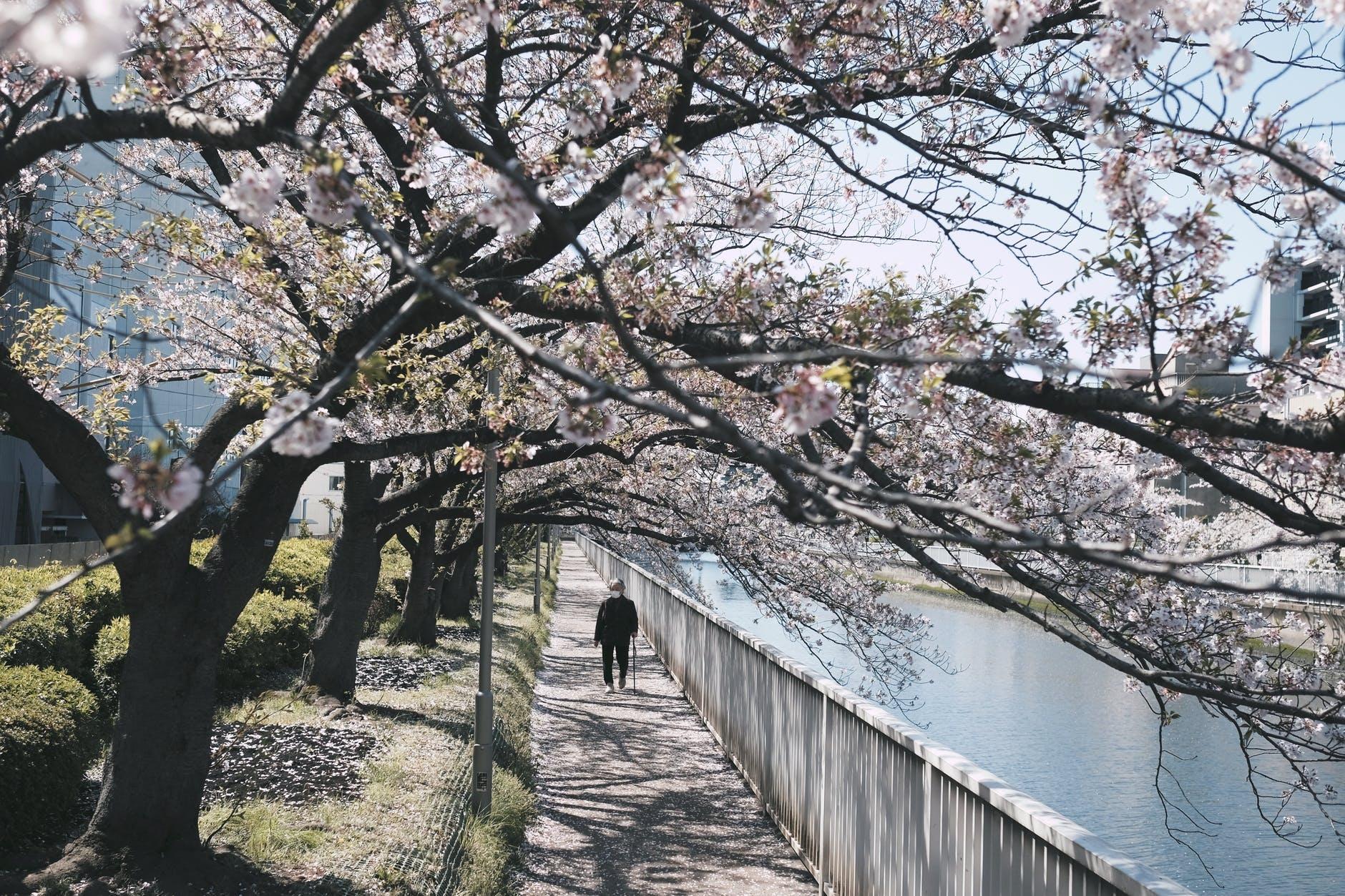 ④:近所を散歩してみる