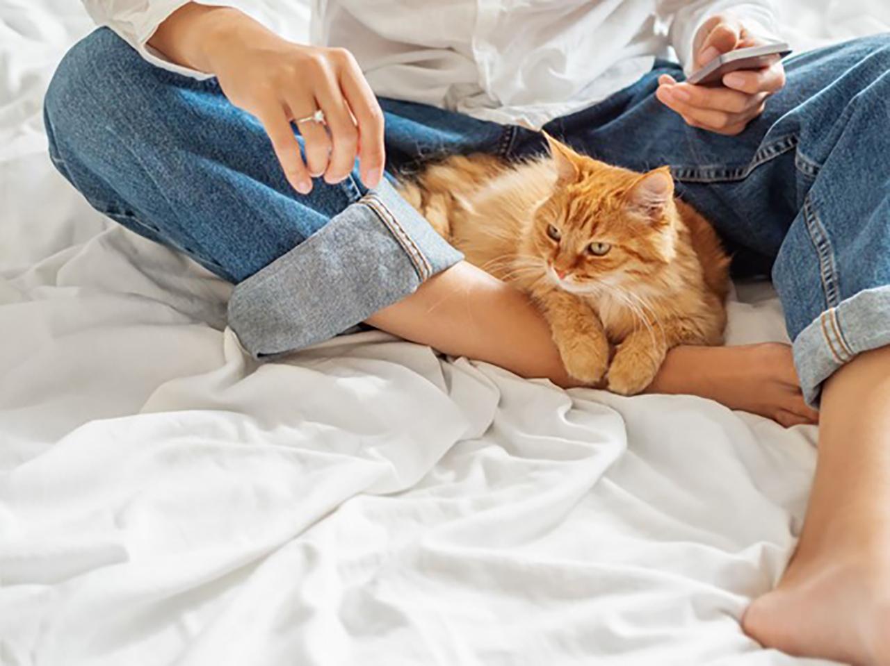 猫好き男子の性格の特徴