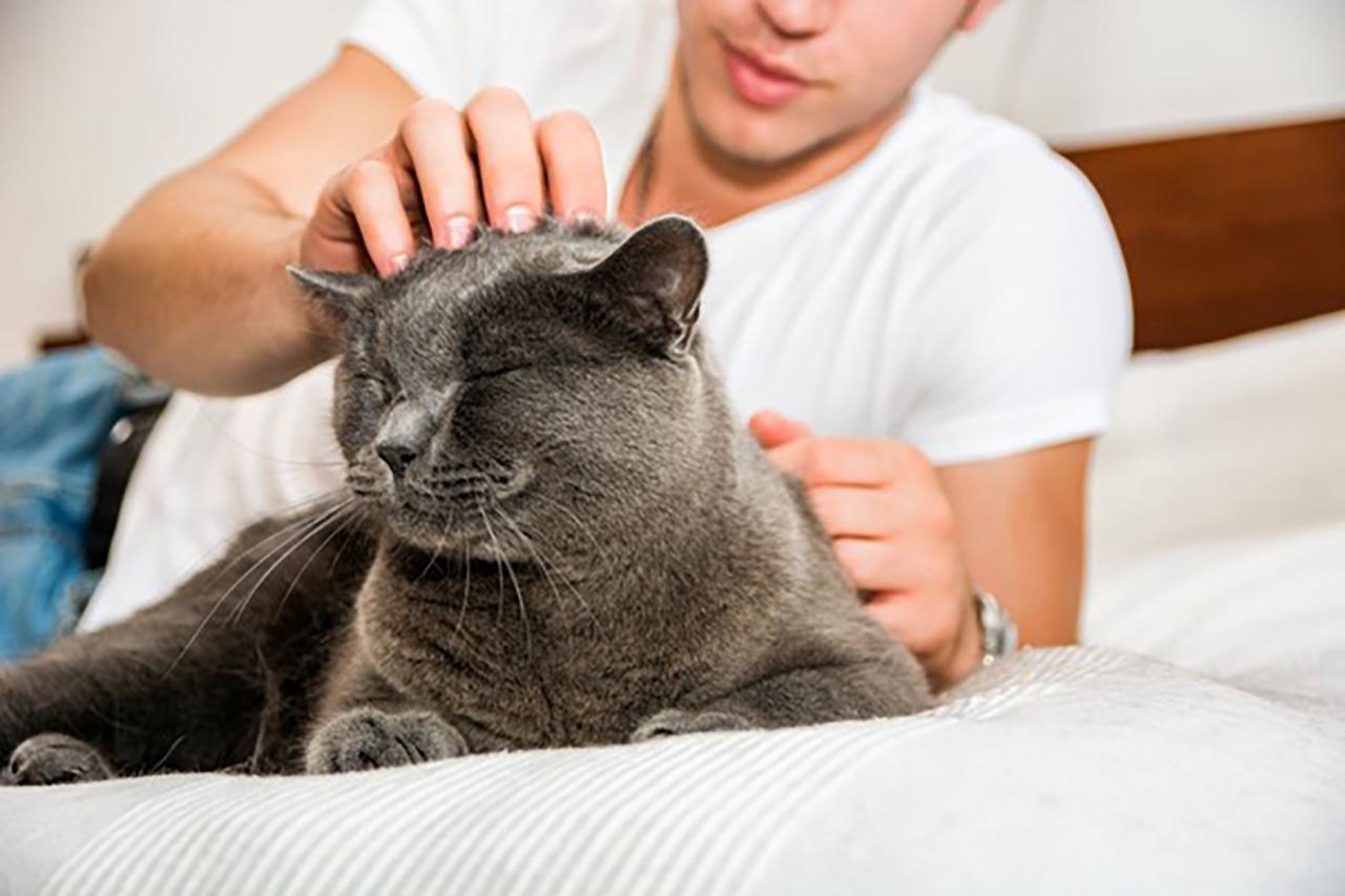 猫好きってどんな人?