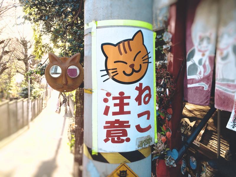 電柱に貼られた「ねこ注意」のポスター