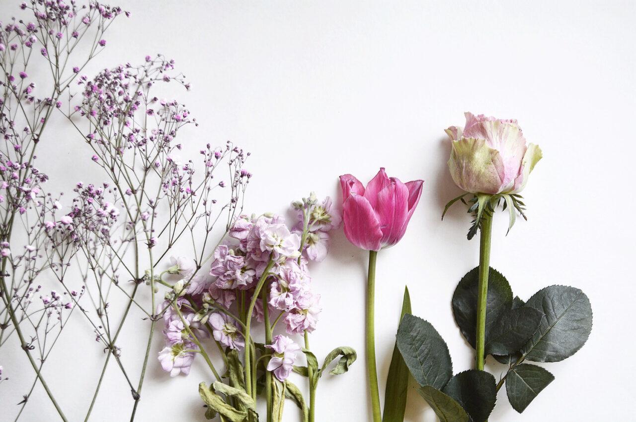 種類の違う花が置かれて並んでいる