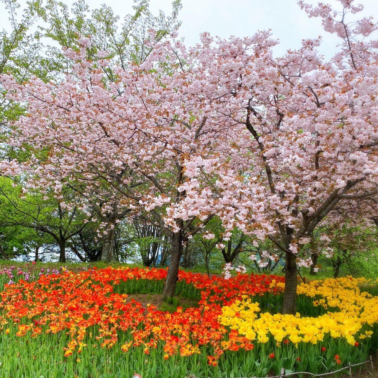 花畑と花の木