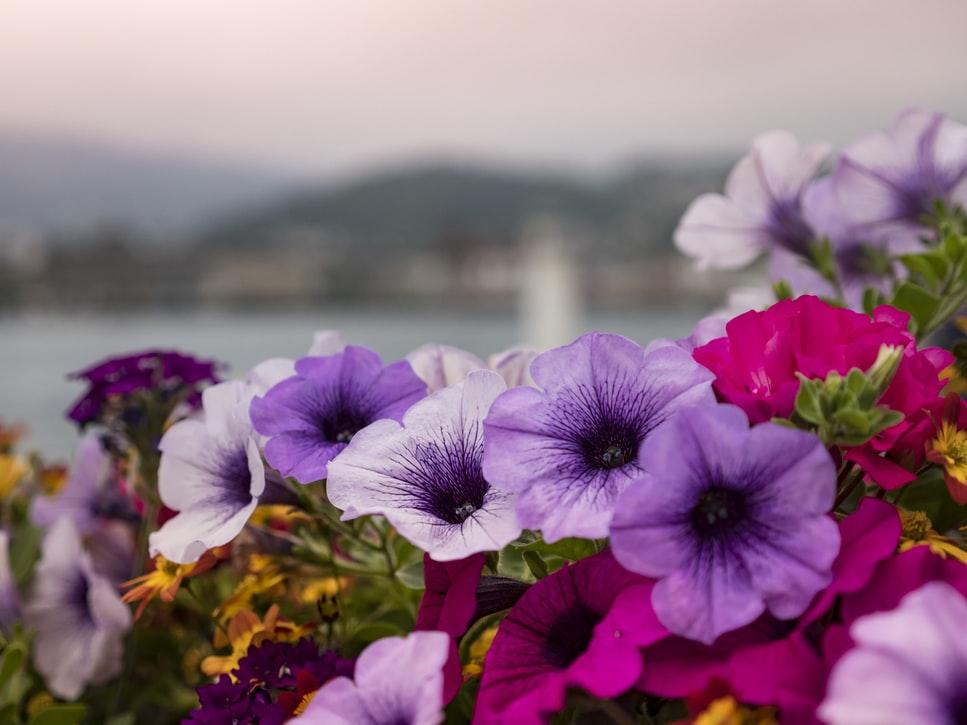 紫系のお花