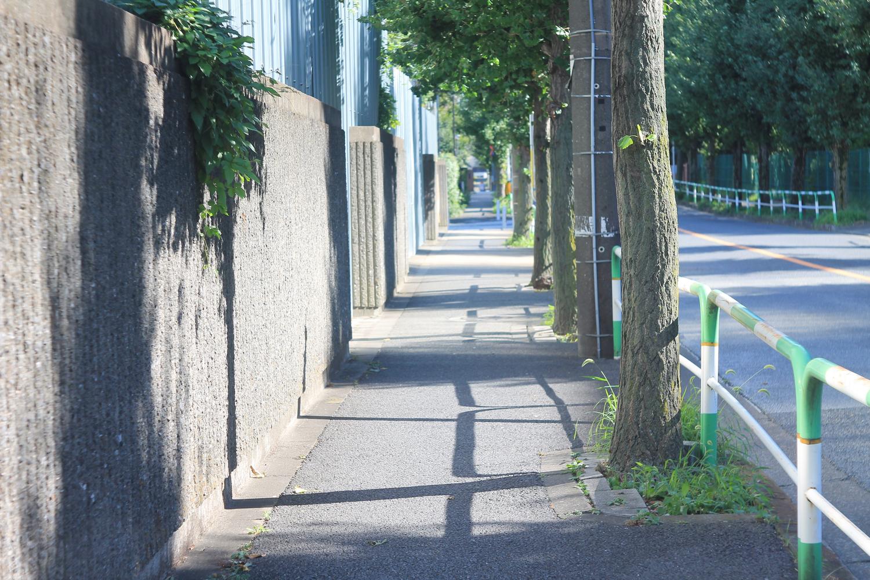 好きな人と歩く道
