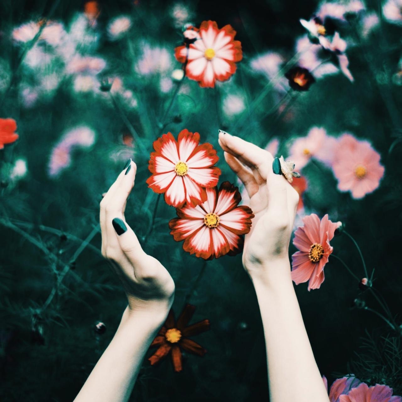 赤い花と手