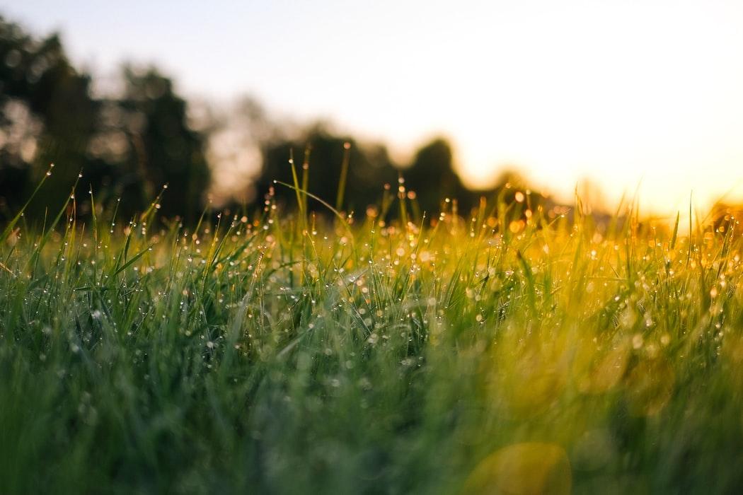 雨上がりの草原