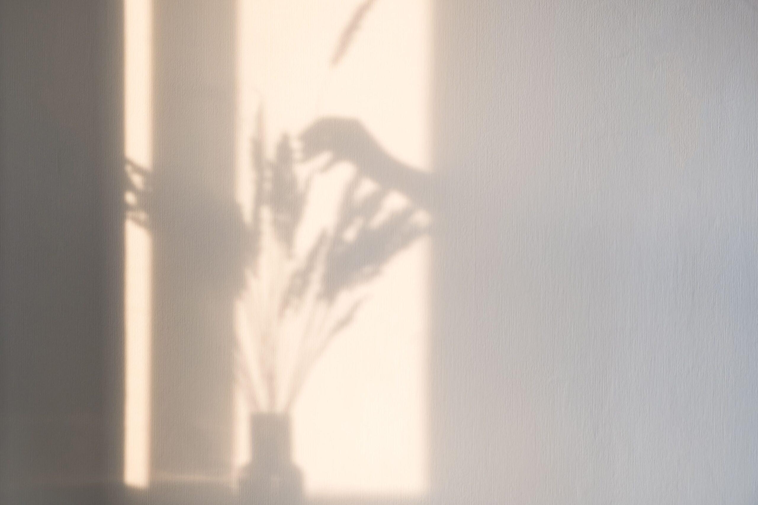 植物と手の影